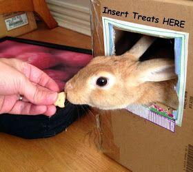 insert treats here.jpg