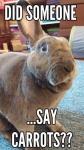 say carrots.jpeg