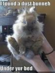 dust bunny.jpg