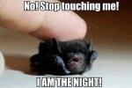 touching a bat.jpg