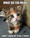cat tiger.jpg