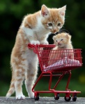 cat and cart.jpg