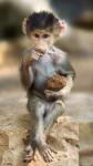 monkey thinking.png