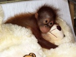 monkey and teddy bear.jpg