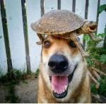 dog and turtle.jpg