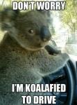 kaola driving.jpg