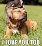 dog and racoon.jpg